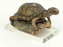 Antique Taxidermy Turtle on Bark with Acrylic Stand. Minor Losses to Shell Otherwise Good Condition. Turtle Measures 4-3/8 Inches Tall and 10 Inches Long. We Will Not Ship This Item Out of State of Florida. Anyone Having This Item Shipped Must Have a