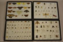8 Showcase Displays Of Entymology Samples- Butterflies, Dragonflies, Moths, Beetles and more