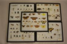 9 Showcase Displays Of Entymology Samples- Butterflies, Dragonflies, Grasshoppers and more