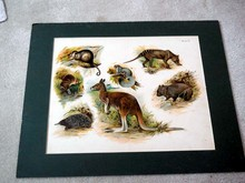 Chromolithograph of Animals