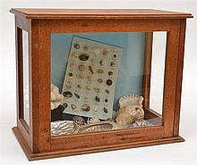 A SMALL COLLECTOR'S CABINET CONTAINING A DISPLAY OF SHELLS