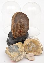 A COLLECTION OF MINERAL SPECIMENS, TOGETHER WITH TWO GLASS DOMES