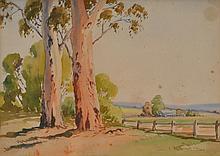 ALASTAIR CAMERON GREY, (1898-1972) EUCALYPTS