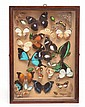 FRAMED DIORAMA CONTAINING AN ASSORTMENT OF BUTTERFLY SPECIES AND BEETLES