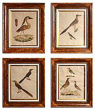 A SET OF FOUR ORNOTHOLOGICAL PRINTS IN BIRDSEYE FRAMES after the originals potentially by Heinrich Gottlieb Ludwig Reichenbach (1793-1879), each 57 x 42.5cm