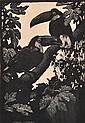 LIONEL LINDSAY (1874-1961) Toucans 1925 wood engraving ed. 100