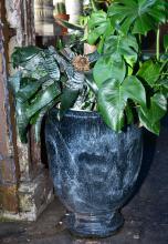 A LARGE CERAMIC GLAZED URN COMPRISING VARIOUS POTTED PLANTS