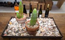 A METAL TRAY COMPRISING AN ASSORTMENT OF SEASHELLS AND TWO POTTED CACTI