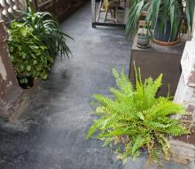 A POTTED FISHBONE FERN AND THREE OTHER POTTED FERNS