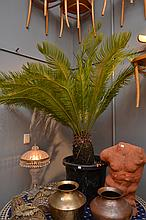 A LARGE POTTED CYCAD