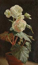Alice Marian Ellen Bale (1875-1955) White Begonia