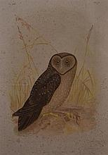 AFTER JOHN GOULD, PRINTED BY G. J. BROINOWISKI,  STRIX TENEBRICOSUS, SOOTY OWL, LITHOGRAPH 33 X 23CM