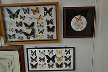THREE FRAMED BUTTERFLY DIORAMAS