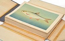 KONDAKOV'S FISH PLATES