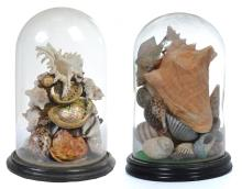 A PAIR OF SHELL ARRANGEMENTS HOUSED WITHIN GLASS DOMES ON HARDWOOD BASES, 35CMS HIGH AND 36CMS HIGH