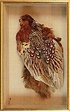 Framed Ringtail Pheasant Mount