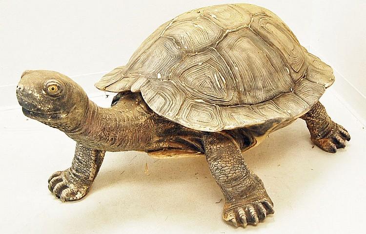 Large Garden Tortoise