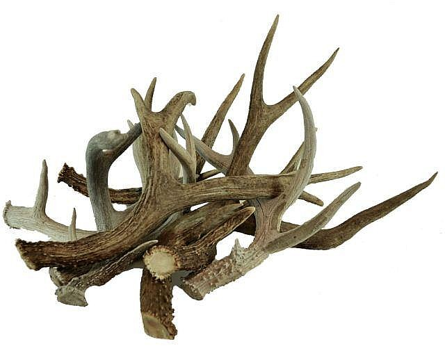 Lot of Deer Antlers