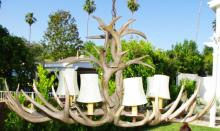 Natural Shed Antler Single Tier Chandelier 8 Light