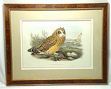 H.C. Owl Litho