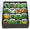 Vegetable Garden Seed Display