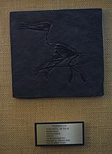 Pterodactyl Jurassic Period Fossil Museum Casting