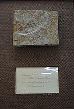 Farson Fish Farson Wyoming Eocene Epoch 50 Mil.