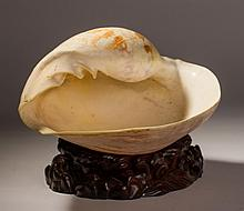 Mollusk Shell w Original Chinese Carved Rosewood Base