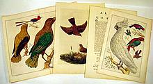 3Pcs Laid Paper Watermarks ANTIQUE ORIGINAL ORNITHOLOGICAL ENGRAVINGS Hand Tinted Prints Plates Alauda Ornithology