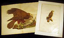 2Pcs Birds Of Prey ANTIQUE HAND-TINTED ENGRAVED ORNITHOLOGICAL PLATES Original Milvus Aeruginosus Falco Albidus Female Buzzard Sussemihl