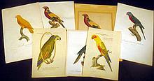 7Pcs Hand-Tinted Laid Paper ANTIQUE ORIGINAL ORNITHOLOGICAL ENGRAVINGS Plates Prints Barraband Parrots Ornithology
