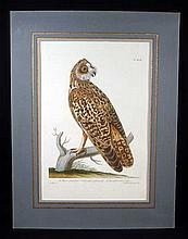 Short Eared Owl ANTIQUE HAND-TINTED ORNITHOLOGICAL ENGRAVING c1775 Matted Frame Strix Paillou Pennant Haid Laid Paper