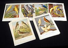 27Pcs Rutledge CHROMLITHOGRAPH PLATES FROM