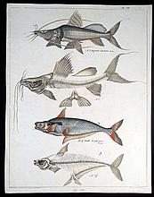 Jean-Jacques Rigaud ANTIQUE HAND-COLORED FRENCH LITHOGRAPH c1840 Fish Ichthyology Voyage En Egypte Egyptology Ancient Egypt Nile River Du Nil Natural Sciences Freshwater