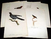 6Pcs Hand-Tinted ANTIQUE ORNITHOLOGICAL ENGRAVINGS Prints Gremilliet Decourcelles Gremillier Barraband Euophone Organiste Barbu Rollier French Ornithology