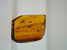 Baltic Amber,11 insect inside