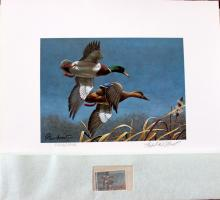 Richard Plasschaert's Federal Duck Stamp Print w/ Stamp