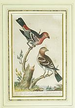 J Pass - a set of six reproduction coloured engravings of birds including: