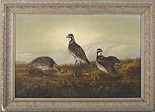 ALFRED T. CROOK (AMERICAN 1846-1932). QUAIL AND THEIR CHICKS.