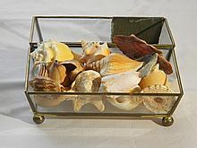 A GLASS BOX FULL OF RARE SHELLS