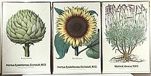 Three New York Botanical Posters, Copyright 1971
