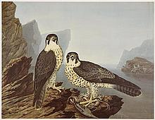 Richard Dunscombe Parker (c.1805-1881) British The Peregrine Falcons, Male and Female
