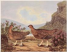 Richard Dunscombe Parker (c.1805-1881) British Grouse, Male and Female