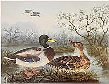 Richard Dunscombe Parker (c.1805-1881) British Malard and Duck