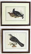 TWO ORNITHOLOGICAL HAND COLORED LITHOGRAPHS: