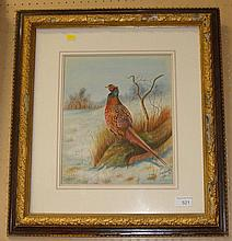 Pheasant watercolour by Frank D Harrington 1915 F