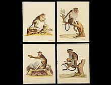 GROUP OF FOUR HAND COLORED ENGRAVINGS OF MONKEYS