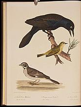 American Ornithology; Or, The Natural History of Birds Inhabiting the United States, Not Given by Wilson. Volumes 1 through 3
