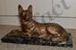 CHIPARUS Dimitri, 1886 -1947 Chien policier bronze à patine brun doré sur un socle en marbre écume de mer, titre et nom de l'artiste sur un cartouche,  Haut. : 25 cm + socle - Larg. : 48,5 cm.