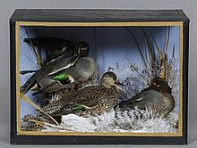 A preserved three of teal Naturalistically mounte